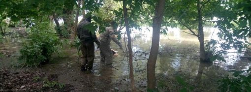 Двое людей утонули в Одесской области в субботу