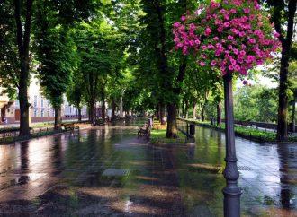 Улицы и районы Одессы озеленят на двадцать миллионов гривен