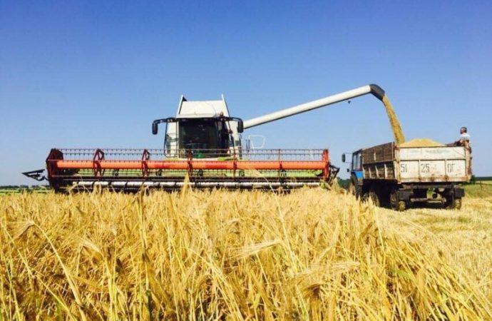 Сбор зерновых в Одесской области стартовал. Что грозит нашему урожаю?