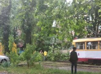 Ночная буря спровоцировала падение деревьев