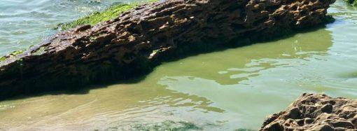 Зеленое Черное море: купаться все-таки не советуют