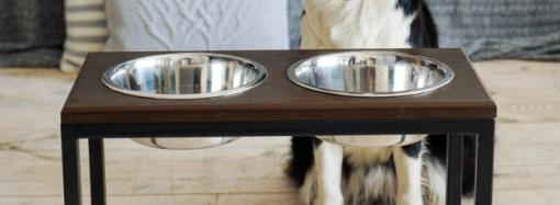 Как подобрать удобную миску на подставке для собак