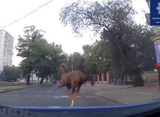 На одесском Фонтане полиция поймала сбежавшую с тренировки лошадь (видео)