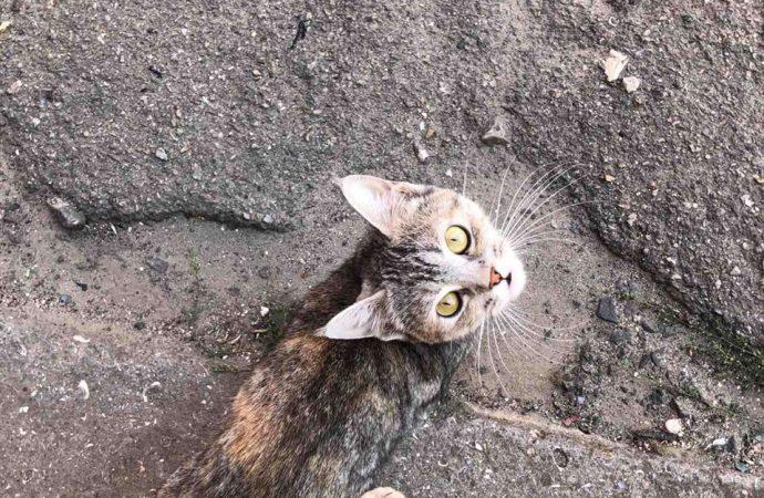 На території розформованої колонії №51 залишилося кілька десятків котів, активісти б'ють на сполох