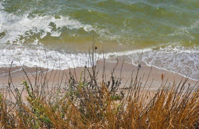 Экология Черного моря: содержание опасных химических соединений превышает норму