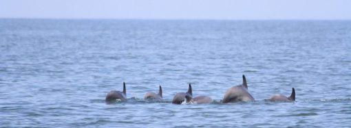 Экосистема Черного моря возрождается: замечены осетр и белуга