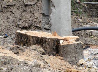 «Деревянный» скандал на Софиевской: кто разрешил спиливать деревья?