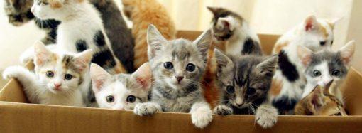 В одесской квартире заморили голодом три десятка котят (видео 18+)