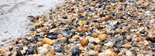 Экология Черного моря: каких ждать неожиданностей