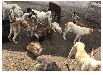 Волонтеры ищут новых хозяев для собак, которых морили голодом в Одесской области