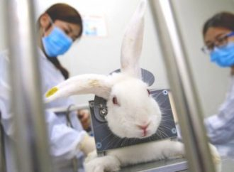 В Україні хочуть заборонити тестувати косметику на тваринах