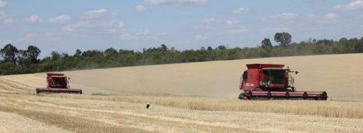 «Урожай-2019»: Одесской области до «первого миллиона» по пшенице ещё далеко
