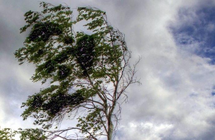 Ветер повалил деревья на детскую площадку в Одесской области