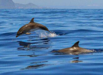 На Одещині мертвого дельфіна викинуло на берег