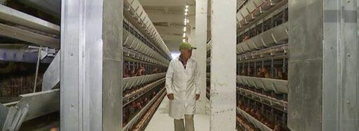 В Одеській області агрофірма створила власну птахофабрику, задля отримання органічного добрива