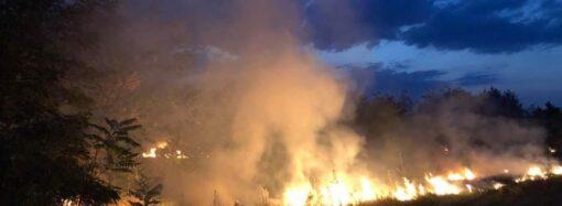Дым столбом: в Одесском регионе горит лесопосадка (видео)