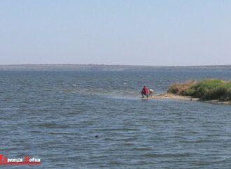 Річкова камбала, кефаль та атерина: Тилігульський лиман поповнився рибою