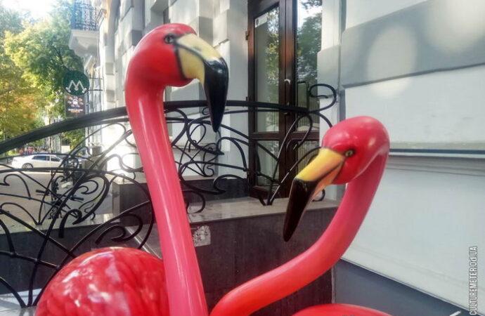 В центре Одессы поселились розовые фламинго (фото)