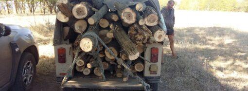 На Одещині в заповідній зоні місцеві жителі вирубали дерева