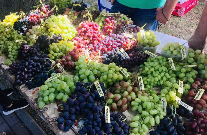 Без косточек, гигантские и со вкусом ландыша: в Одессе похвастались уникальными сортами винограда (фото)
