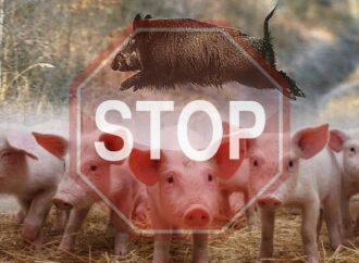 Африканская чума свиней: еще в одном районе Одесской области ввели карантин