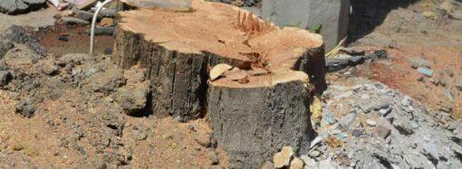 На вулиці Софіївській впродовж двох місяців будівельники спиляли майже півсотні дерев