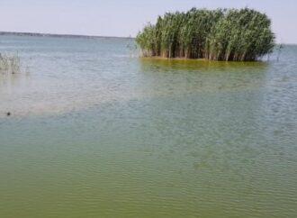 Высыхают водоемы: несколько районов Одесской области на грани экологической катастрофы