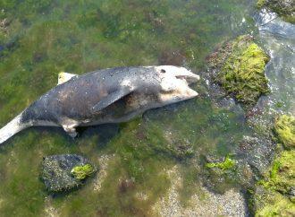 На одесском пляже нашли мертвого дельфина