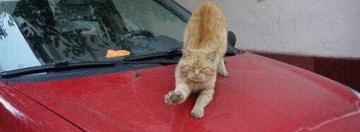 В Одесі чоловіки влаштували перестрілку через кішку на капоті автомобіля
