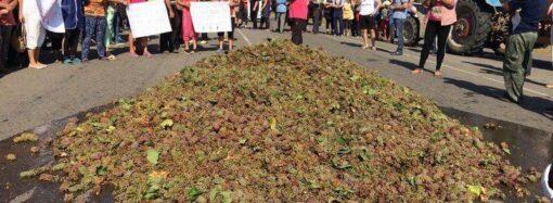 Перекрили дорогу, накидавши гору винограду: на Одещині протестують виноградарі