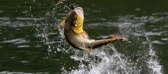В Одесской области ввели запрет на ловлю рыбы