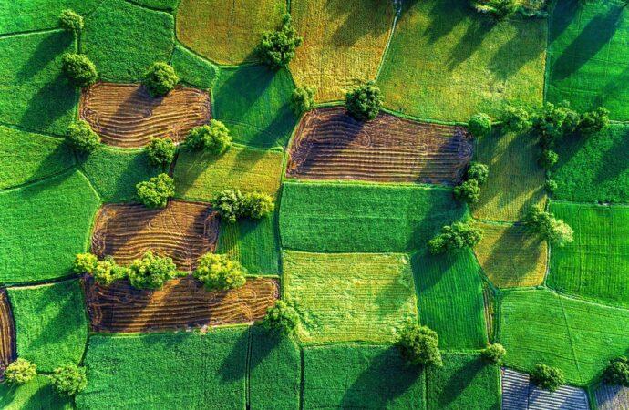 Когда и как в Украине будет работать рынок земли и сколько стоит земля в постсоветских странах?
