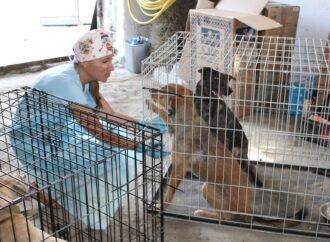 Гуманная борьба с бездомными собаками: в Одесской области стерилизуют животных
