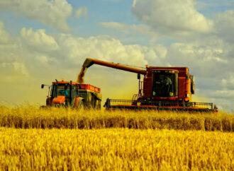 В Болградском районе засуха убила большую часть урожая