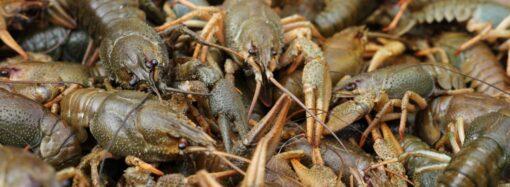 На Одещині заборонили ловити раків у річці Дунай та Придунайських озерах