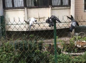 В Одессе недалеко от школы развесили туши мертвых голубей