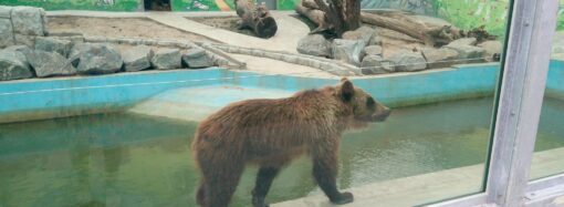 До Одеського зоопарку переїхав бурий ведмідь з Вінниці