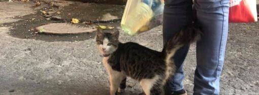 В Одессе ищут дом спасенному котенку, над которым издевалась хозяйка (видео)