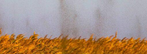 Похоже на смерч: в нацпарке под Одессой засняли тучи комаров (фото, видео)