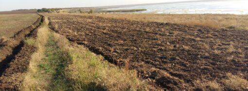 В заповеднике под Одессой из-за захвативших земли фермеров гибнут растения и живность