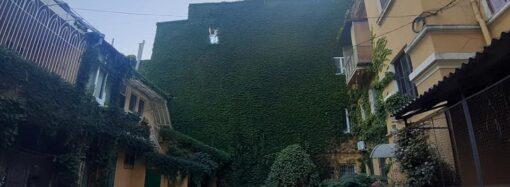 Райский уголок: в Одессе показали самый зеленый дворик города (фото)
