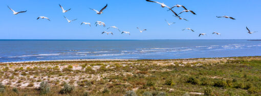 Одессит побывал в птичьем царстве и с высоты снял причудливые острова (фото)