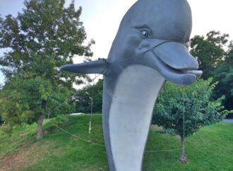 На одесском пляже заметили привязанного к деревьям дельфина