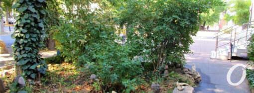Одесский сад камней: как жительница Молдаванки преобразила свою улицу