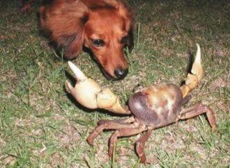 Одессит накормил собаку раками и устроил разборки с ветеринаром