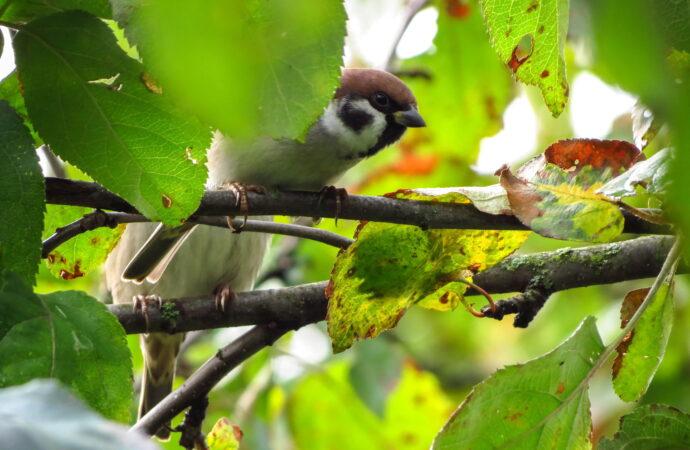 В Украине будут высаживать деревья для диких птиц: лиманы Одесской области в списке локаций