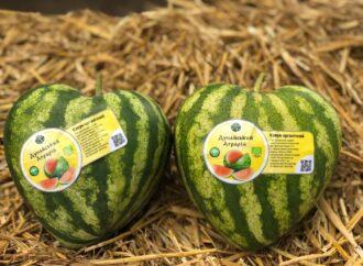 Арбузы-сердечки: в Одесской области выращивают ягоду необычной формы