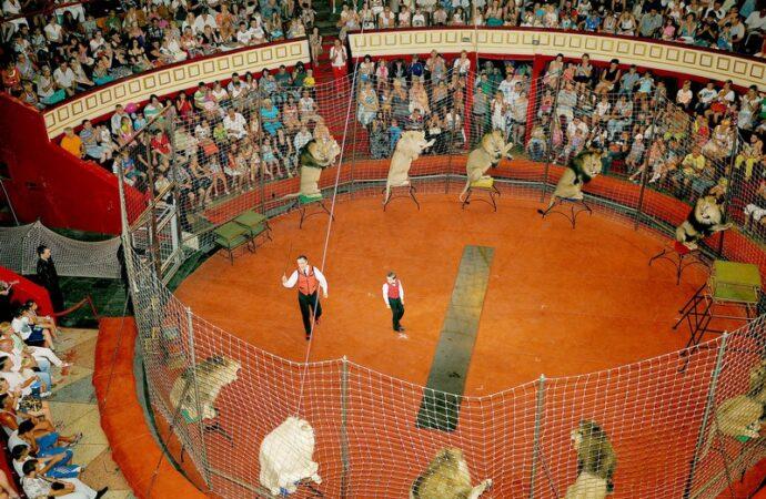 Одесский цирк может стать первым в Украине, где запретят выступать животным