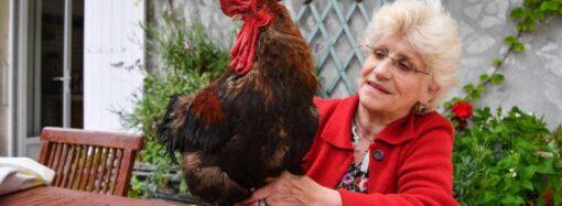 Дело о петухе: во Франции домашняя птица отсудила право кукарекать по утрам
