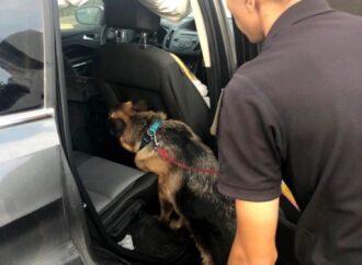 """Одесский пес """"учуял"""" контрабанду в машине, прибывшей из Америки"""